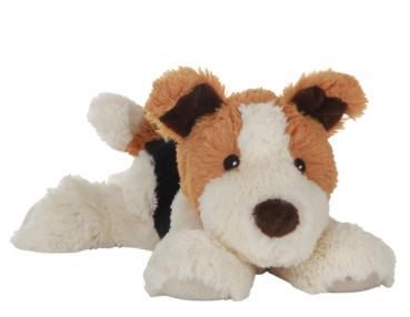 Habibi - liegender Hund, braun weiss